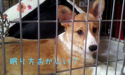 2012_02_13_12_25_43.jpg