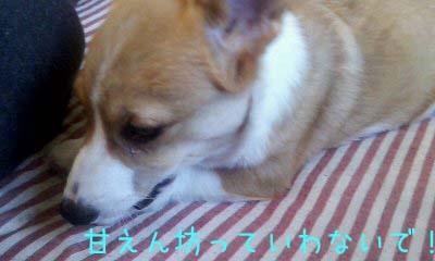 2012_02_21_16_07_55.jpg