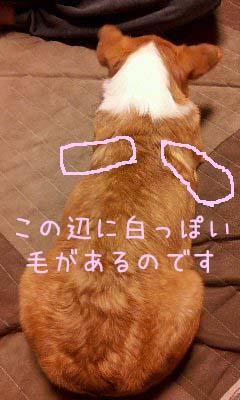 2012_02_27_20_37_53.jpg