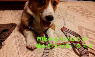 2012_03_03_20_42_27.jpg