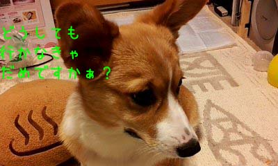 2012_03_07_07_08_19.jpg