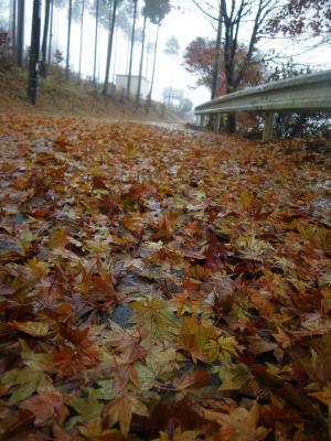 秋から冬へ4