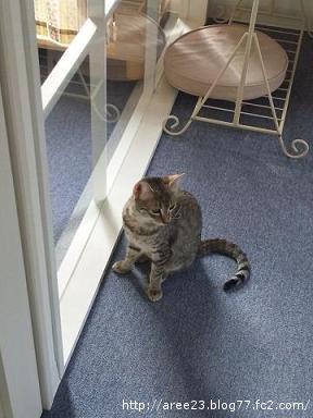 猫カフェ①