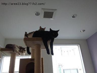 猫カフェ④