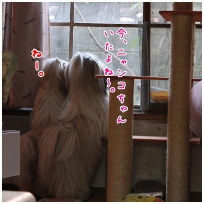 2010-12-06-01.jpg