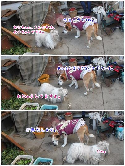 2010-12-11-06.jpg