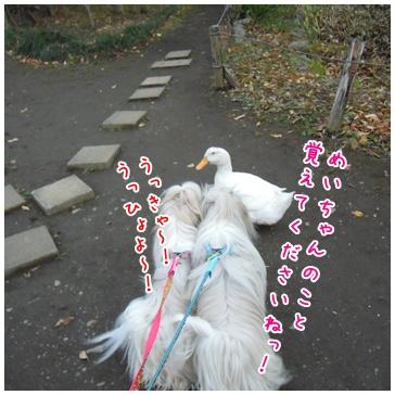 2010-12-12-06.jpg