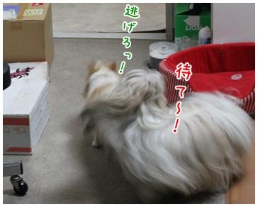 2010-12-14-03.jpg