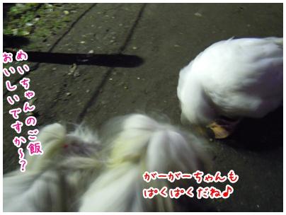 2011-01-05-05.jpg