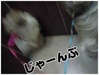 2011-01-11-02.jpg