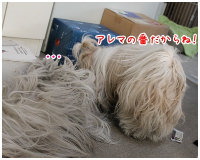 2011-01-13-06.jpg