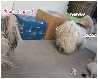 2011-01-13-07.jpg