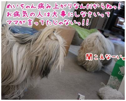 2011-01-13-08.jpg