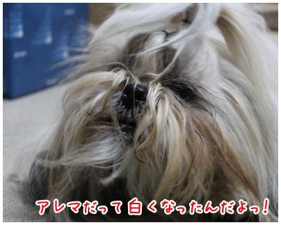 2011-01-14-04.jpg