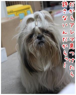 2011-01-20-04_20110119215854.jpg