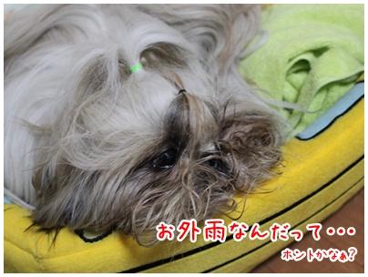2011-01-21-01.jpg