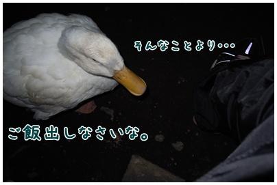 2011-01-24-04.jpg