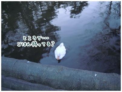 2011-01-28-04.jpg