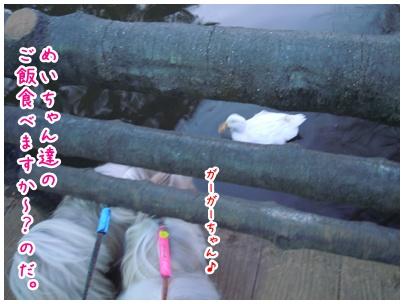 2011-01-28-05.jpg