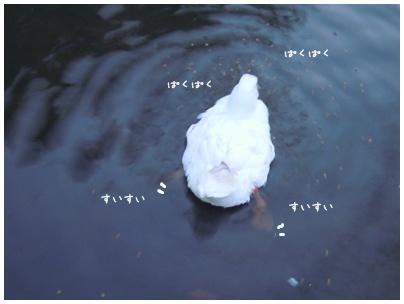 2011-01-28-08.jpg