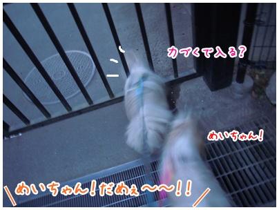 2011-02-10-04.jpg