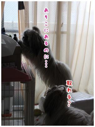 2011-03-30-05.jpg
