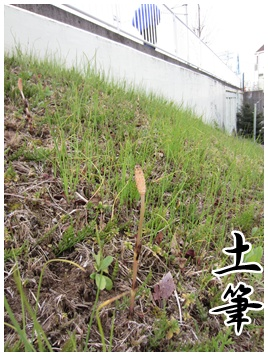 2011-04-08-01.jpg