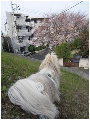2011-04-08-02.jpg
