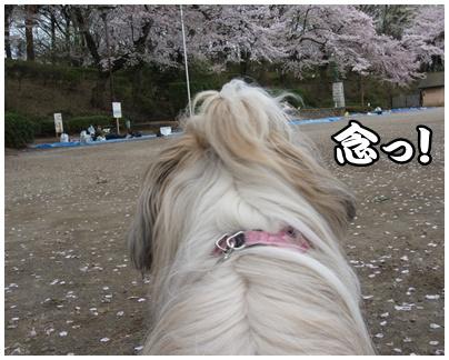 2011-04-11-05.jpg