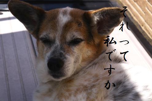 コピー ~ IMG_7385
