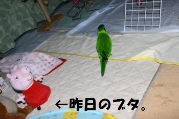 コピー ~ IMG_7901 - コピー