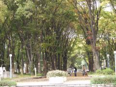 2007-11-15.jpg