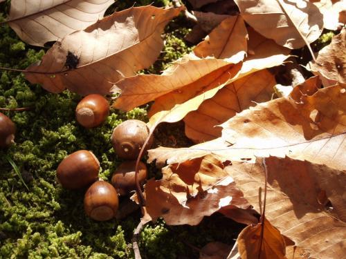 2007-11-26-10_20071130110334.jpg