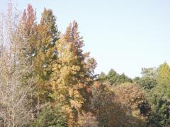 2008-11-26-18.jpg