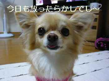 blog2011052701.jpg