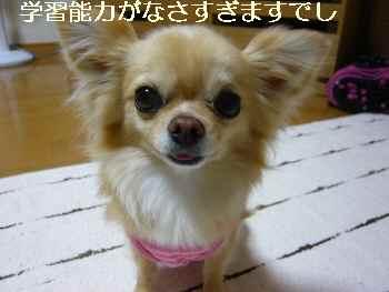blog2011052906.jpg