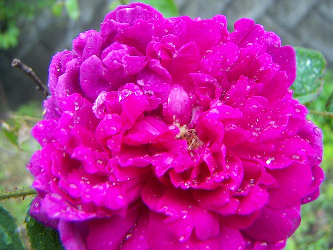 PICT0010_20110527185727.jpg