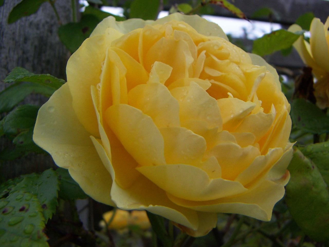 PICT0015_20110527185612.jpg