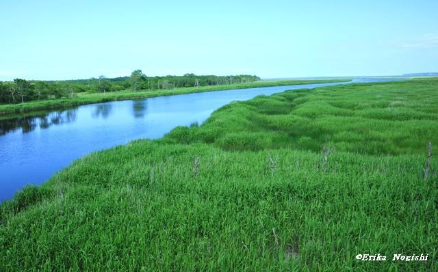 ヤウシュベツ川湿原