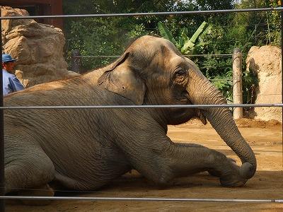 2007_1117上野動物園0030