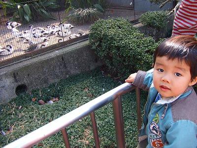 2008_0226チョコフォン・上野動物園0018