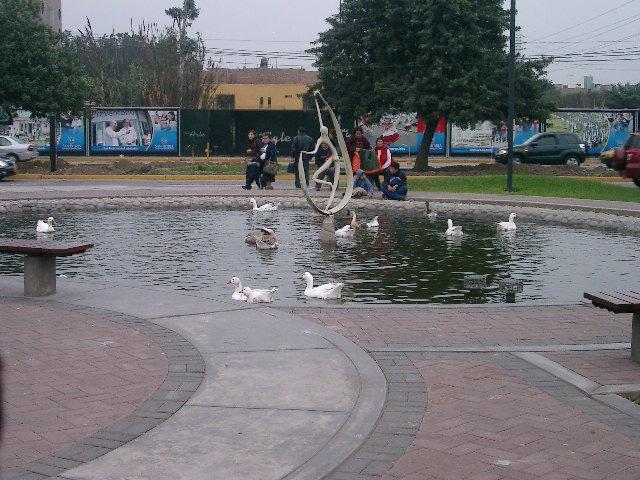 池の中の鳥たち