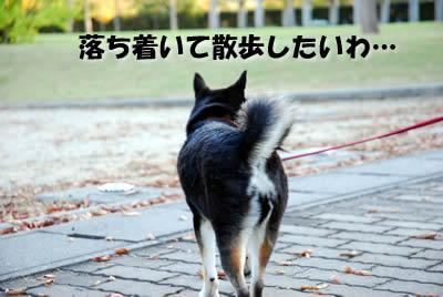 20071111_0058.jpg