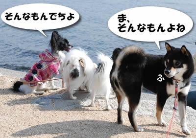 達観する犬たち
