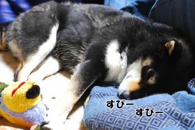 眠り姫 プッ