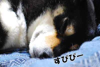 眠り姫2 ププーッ