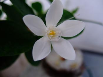 正真正銘の花