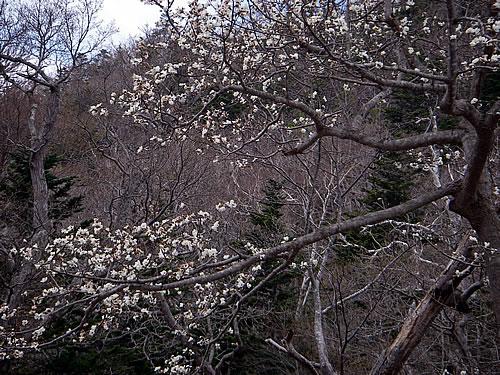 hitokoma2011-517-2.jpg