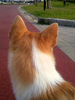 20090923汐入公園うしろびじんw