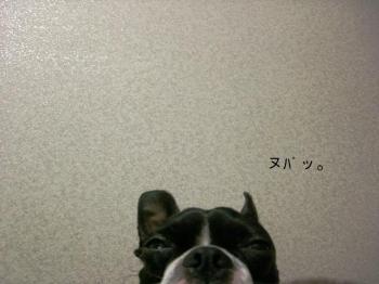 CIMG4618.jpg